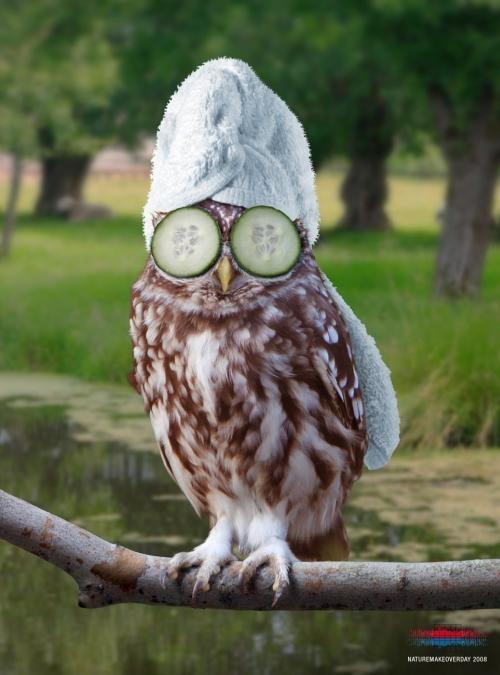 Owls take a spa