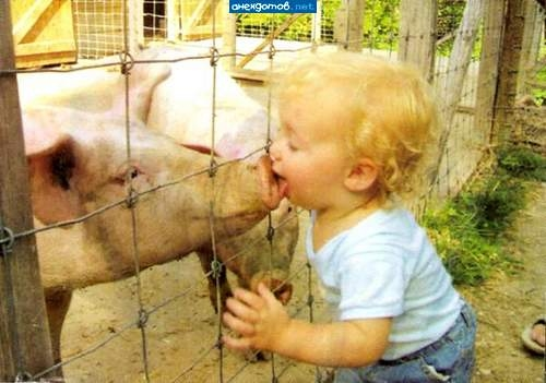 Kid kissing a pig