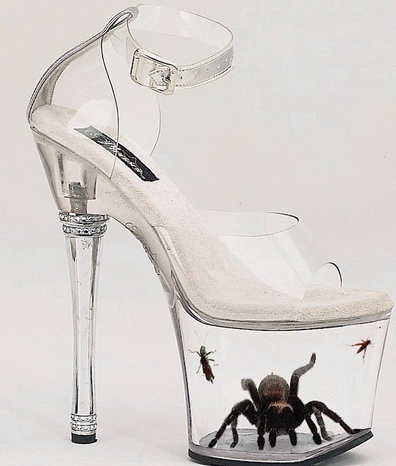 Spider in the shoe