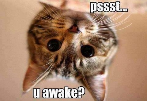 Cat waking you up?
