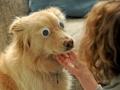 Dog with fake eyes