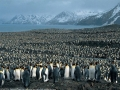 That is a lot of penguins