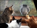 All of these cats have one thing on their mind