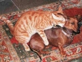 Cute/Funny Animals