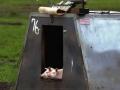 Piggys in the owen