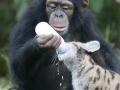 Monkey feeding kitty cat