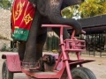 Elephant riding big bicycle