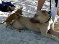 Training older dogs