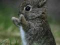 Cute Wabbit